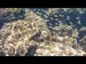 wpid-snorkeling-1.png.png