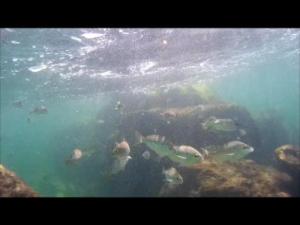 wpid-snorkeling-2.png.png