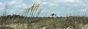wpid-st-george-island-6-15-dunes-6x2.jpg.jpeg
