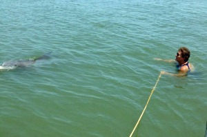 Jackie's dolphin encounter