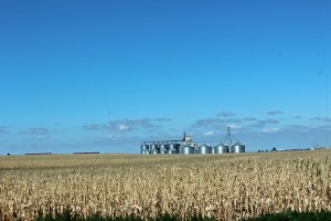 Kansas cornfield