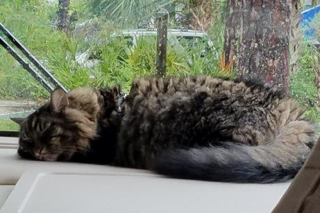 RV Cat (1)