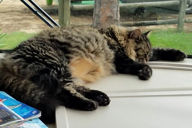 RV Cat (4)