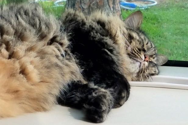 RV Cat (5)