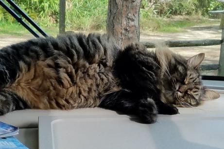 RV Cat (6)