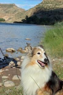 Colorado River Dog Benji