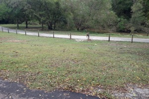 San Antonio creek low