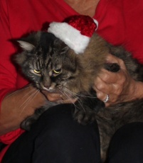 Christmas Merlin 1