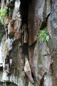 1 Cloudland Canyon (105)