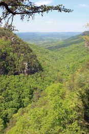 1 Cloudland Canyon (120)