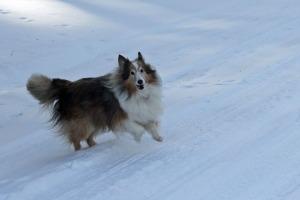Benji Snow 1