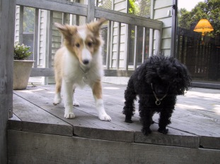 Benji and cousin Nikki on the deck.
