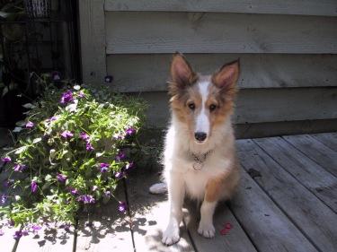 Puppy ears look so big