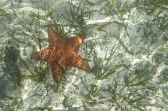 Starfish on sandbar