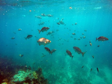 reef fish school