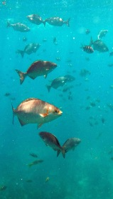 reef fish school 2