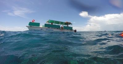 Snorkel Boat