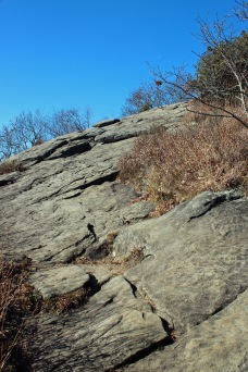 Trail on the bald