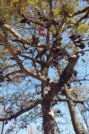 Hiker's boot tree, Neels Gap