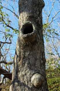 Perfect racoon tree
