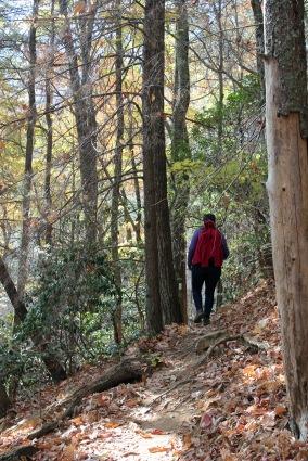 Bear Hair Trail