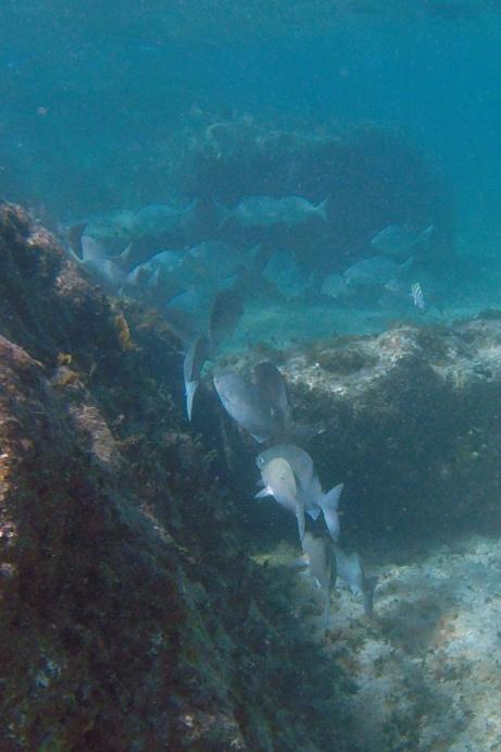 Coco Cay snorkel.