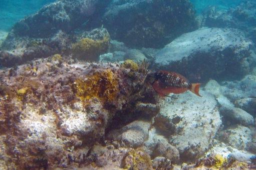 Coco Cay snorkel
