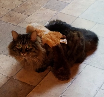 Merlin with new fur coat