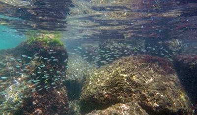 Baitfish