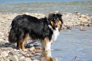 a Kodi at St Marys River