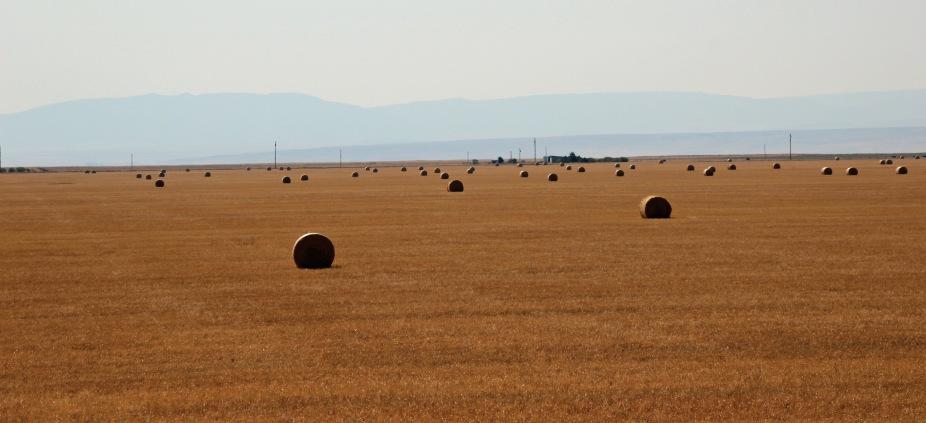 a Montana (14)