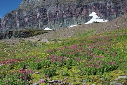 b Glacier NP (113)