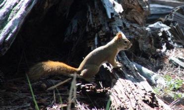 b Squirrel (1)