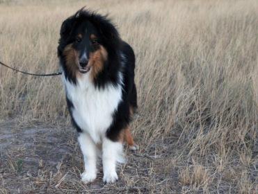 Prairie dog Kodi