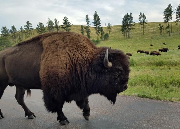 Black Hills and Custer SP (3) b
