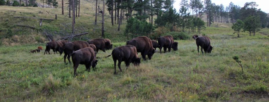 Custer SP (26) b