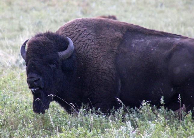 Custer SP (39) b