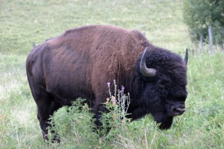 Custer SP (55) b