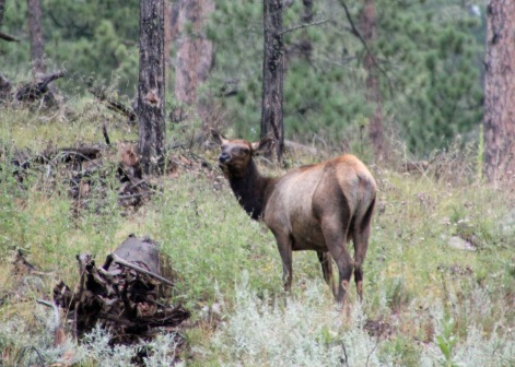 Custer SP (60) b