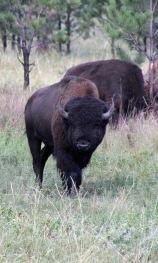 Custer SP (68) b