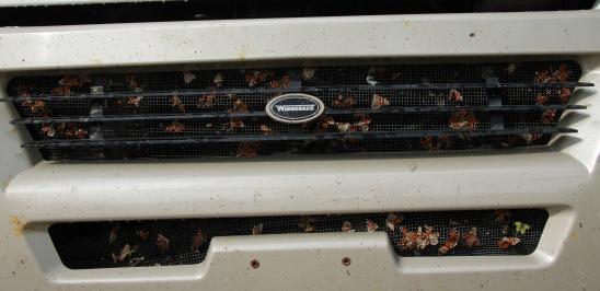 We were pretty deadly on butterflies it seems ...