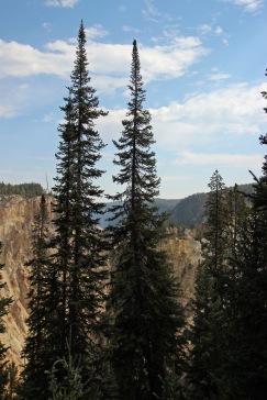 Grand Canyon of Yellowstone (24)
