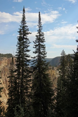 Grand Canyon of Yellowstone (24)