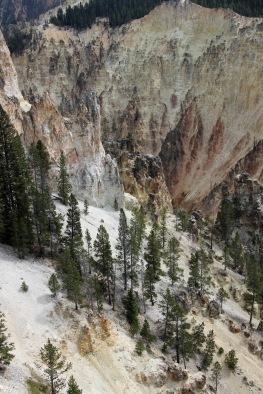 Grand Canyon of Yellowstone (45)