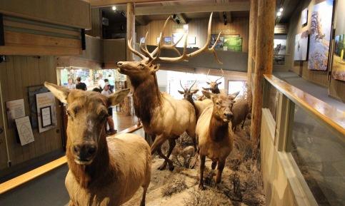 Visitor Center at National Elk Refuge