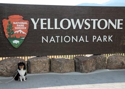 Kodi at Yellowstone