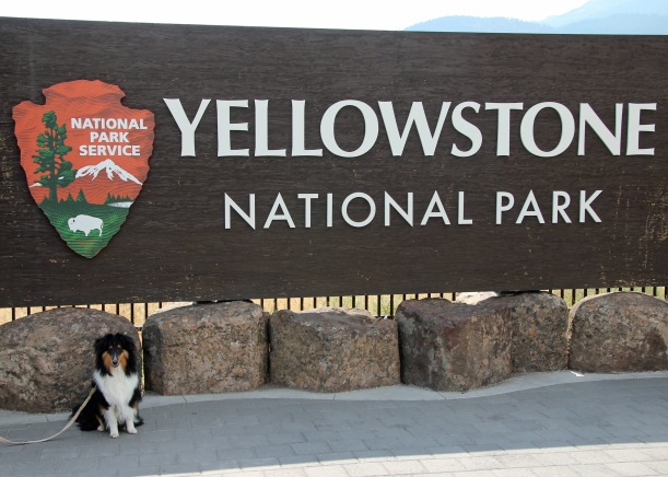 Kodi at Yellowstone
