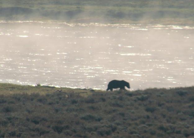 Yellowstone last day (1)