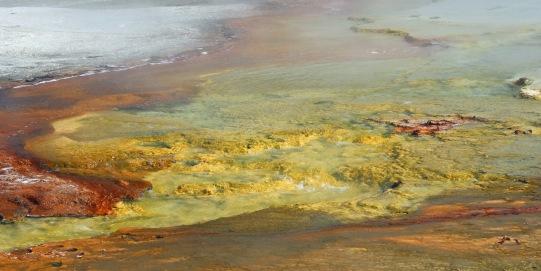 Yellowstone thermals (1)