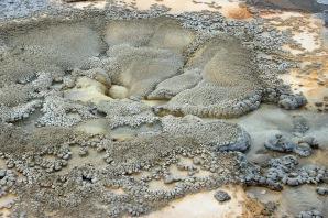 Yellowstone thermals (35)